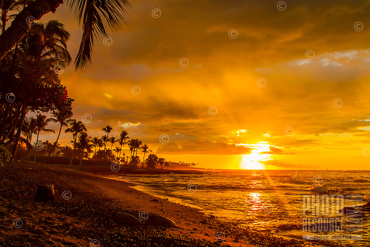 The light from a fiery golden sunset with sunrays on Christmas day shines on two turtles on a black sand beach, Mauna Lani, Big Island.