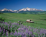 Wilson Peak with Lupine flowers and old barn, Telluride, Colorado, USA. .  John leads private photo tours in Telluride and the San Juan Mountains. Year-round Colorado photo tours.