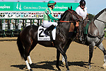 September 14, 2019 : His Glory (#2, James Graham) in the post parade of the G3 Pocahontas Stakes at Churchill Downs, Louisville, Kentucky. She finished second. Trainer Thomas M. Amoss, owner Ben and Sheila Rollins. By Mineshaft x Glorious Sky (Aldebaran) Mary M. Meek/ESW/CSM
