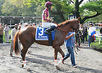 Little Drama, ridden by Rajiv Maragh, runs in the Vosburgh Invitational Stakes (GI) at Belmont Park in Elmont, New York on September 29, 2012.  (Bob Mayberger/Eclipse Sportswire)