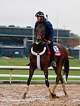 October 28, 2015:  Runhappy, trained by Maria Borell, and owned by James McIngvale, is entered in the Breeder's Cup TwinSpires Sprint. Candice Chavez/ESW/CSM