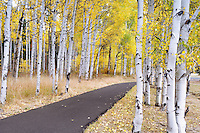 Path and fall colored aspens at Black Butte Ranch. Oregon