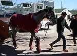 April 3, 2016 UAE Derby winner Lani (Tapit x Heavenly Romance, by Sunday Silence) arrived at Churchill Downs on April 3 to train for the May 7 Kentucky Derby. He is owned by Mr. Koji Maeda, trained by Mikio Matsunaga, and will be ridden in the Derby by Yutaka Take. He was accompanied on the van ride from Chicago by his assistant trainer Eishu Maruuchi and veternarian Takanao Cho.  ©Mary M. Meek/ESW/CSM