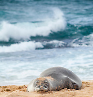 A Hawaiian monk seal rests at Ho'okipa Beach on Maui.