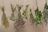 Kräuter trocknen, Kräuterstrauss, Kräuterstrauß, Trockenstrauss, Trockenstrauß, Wildkräuter zum Trocknen aufgehängt, Ernte, Kräuterernte, Kräuterkunde, bouquet of herbs, bunch of herbs, herbology. Gewöhnlicher Beifuß, Beifuss, Artemisia vulgaris, Mugwort, common wormwood. Blutweiderich, Blut-Weiderich, Lythrum salicaria, Purple Loosestrife, Spiked Loosestrife, Salicaire. Oregano, Oreganum, Wilder Dost, Echter Dost, Gemeiner Dost, Origanum vulgare, Oregano, Wild Marjoram. Schafgarbe, Wiesen-Schafgarbe, Schafgabe, Achillea millefolium, Common Yarrow. Echte Kamille, Matricaria recutita, Syn. Chamomilla recutita, Matricaria chamomilla, German Chamomile, wild chamomile, scented mayweed. Große Brennnessel, Brennessel, Urtica dioica, Stinging Nettle. Hopfen, Humulus lupulus, Common Hop.