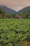 Bear Creek Winery vineyards, Illinois River Valley, southern Oregon.