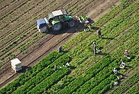 Ernte auf dem Feld: EUROPA, DEUTSCHLAND, SCHLESWIG-HOLSTEIN, (EUROPE, GERMANY), 22.09.2010: Ernte auf dem Feld