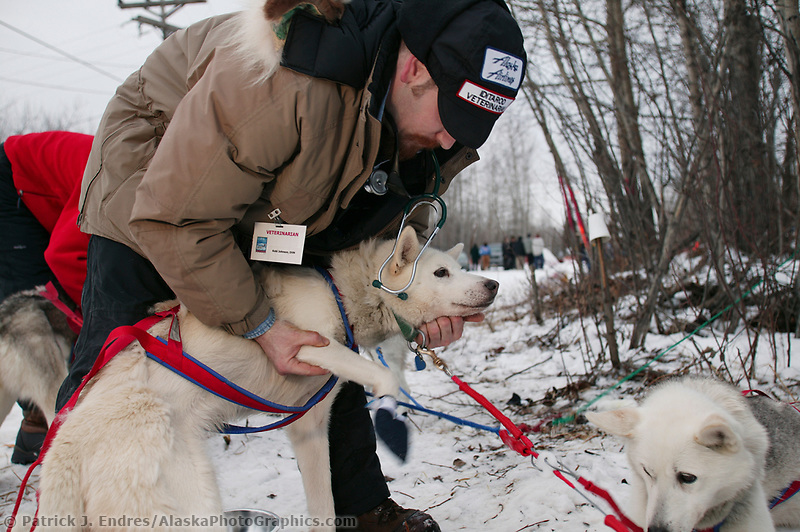 Veterinarian Kobi Johnson checks dogs at the first Iditarod checkpoint in the village of Nenana for the 1000 mile 2003 Iditarod sled dog race from Fairbanks to Nome, Alaska. Lack of snow along the normal trail route further south forced the relocation of the restart on the Chena River in Fairbanks.