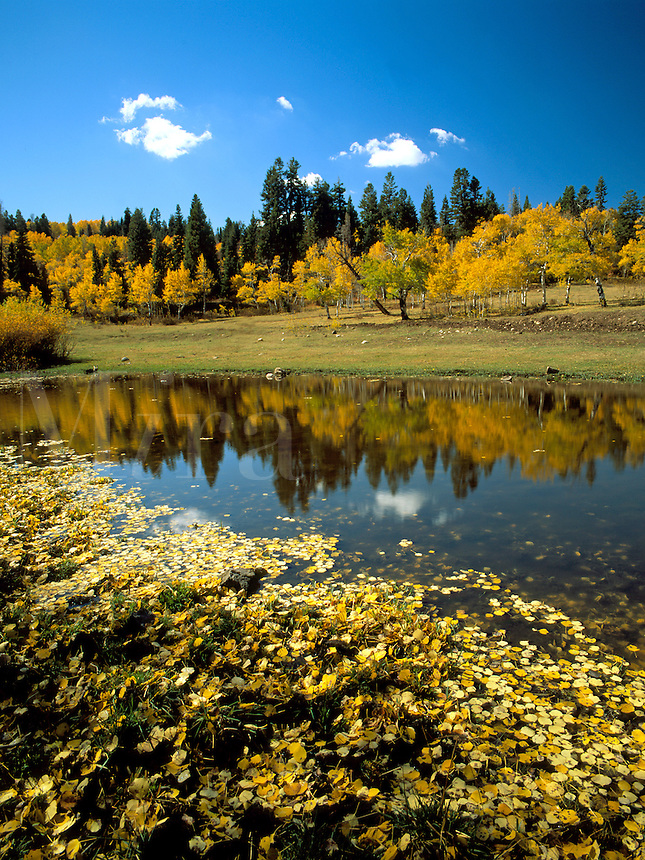 Art in Nature 9609-0121 - A small pond makes for a large impression as it reflects golden fall foliage and a clear blue sky in Payson Canyon. Wasatch Range, Rocky Mountains, Utah.