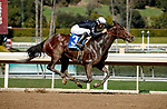 ARCADIA, CA FEBRUARY 6:  #3 Moonlight D'Oro, ridden by Flavien Prat, in the stretch of the Las Virgenes Stakes (Grade lll) on February 6, 2021 at Santa Anita Park in Arcadia, CA.  (Photo by Casey Phillips/EclipseSportswire/CSM)