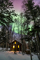 Aurora borealis over a log cabin in the boreal forest of Fairbanks, Alaska.