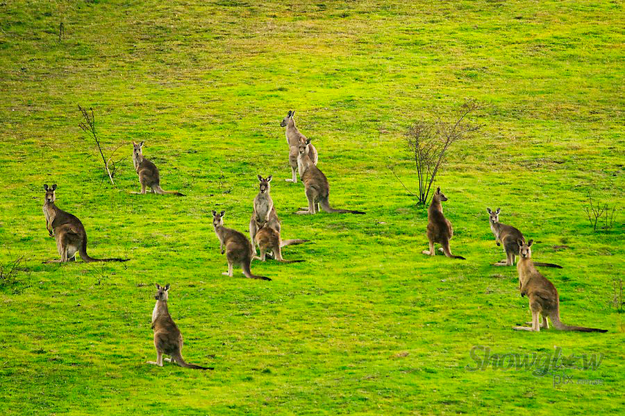 Image Ref: HC091<br /> Location: High Country, Victoria<br /> Date: 25th May 2014