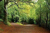 Castlewellan Forest Park, Castlewellan, County Down