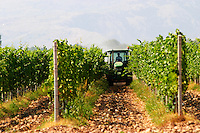 The vineyard with vines on the plain near Mostar with the mountain range in the background. A vineyard tractor spraying with treatment for diseases between the rows of vines. Typical red reddish clay sand sandy soil mixed with pebbles rocks stones in varying amount. Vineyard on the plain near Mostar city. Hercegovina Vino, Mostar. Federation Bosne i Hercegovine. Bosnia Herzegovina, Europe.