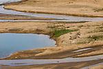 Nile Crocodile (Crocodylus niloticus) bAKING on riverbank, Kruger National Park, South Africa
