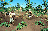 Uganda. Kayunga district. Kiwugu. A mother and her daughter work with mattocks in the  fields  and turn over the soil. They will later plant sweet potatoes. © 2004 Didier Ruef