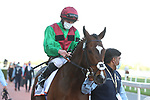 March 27, 2021: #8 Spanish Mission in the post parade for the Grade 2 Gold Cup on Dubai World Cup Day, Meydan Racecourse, Dubai, UAE. Shamela Hanley/Eclipse Sportswire/CSM