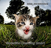 REALISTIC ANIMALS, REALISTISCHE TIERE, ANIMALES REALISTICOS, cats, paintings+++++,USLGSC162044510,#A#, EVERYDAY ,photos,fotos,pounce,cat,cats,kitten,kittens,Seth