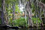 Spanish moss veils a swamp at Magnolia Plantation, Charleston, SC, USA