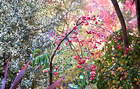 M'eyes tapestry, Weeping crabapple after the rain, November