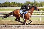 #128Fasig-Tipton Florida Sale,Under Tack Show. Palm Meadows Florida 03-23-2012