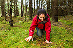 Scottish Wildcat (Felis silvestris grampia) biologist, Kerry Kilshaw, testing camera trap in coniferous forest, Scotland, United Kingdom