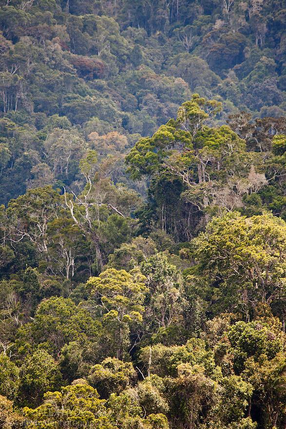 Primary rainforest. Andasibe-Mantadia National Park, eastern Madagascar.