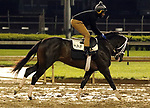 LOUISVILLE, KY -APR 25: Last year's Kentucky Derby winner Always Dreaming works out on a muddy track with exercise rider Nick Bush at Churchill Downs, Louisville, Kentucky. (Photo by Mary M. Meek/Eclipse Sportswire/Getty Images)