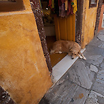 Lazy dog on a hot afternoon in Oia