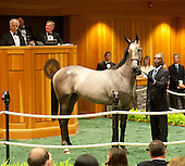 August 7 - Day two at Fasig Tipton Sales - 8/7/12