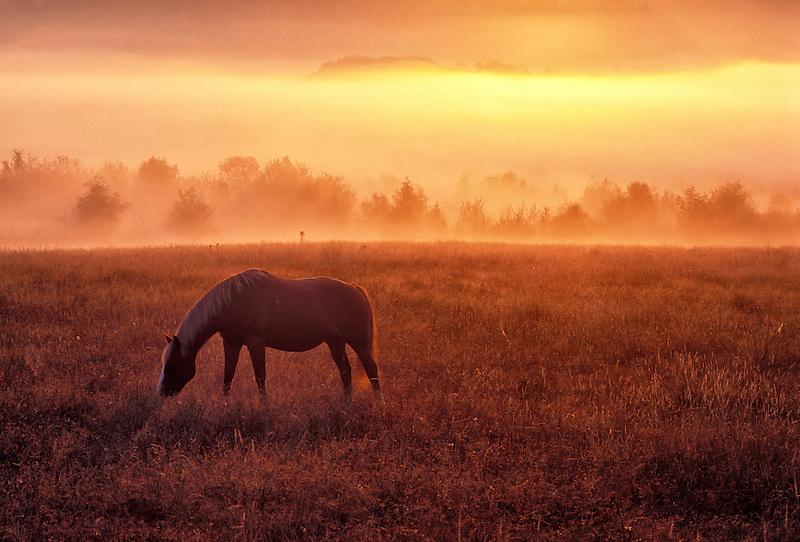 F00022.tiff   Horse in pature at sunrise with fog. Near Monroe, Oregon