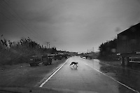 A dog runs in the middle of the street on a rainy day near the old sea port