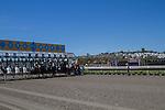 JUL 23,2014:Gate and horses at Del Mar in Del Mar,CA. Kazushi Ishida/ESW/CSM