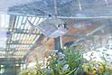 Sony unveils huge aquariums in central Tokyo