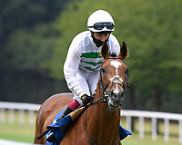 Sidereal ridden by Oisin Murphy goes down to the start of The Federation Of Bloodstock Agents Novice Stake s   during Horse Racing at Salisbury Racecourse on 13th August 2020