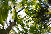 Abstract of birch tree during the summer months at Lafayette Brook Scenic Area in the White Mountains, New Hampshire USA