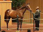 13 September 2010.  Hip #129 Dynaformer - Catch the Ring filly sold for $400,000 at the Keeneland September Yearling Sale.  Consigned by Lane's End.