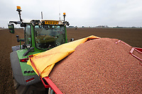 1-3-2021 Spring Barley seed in a drill <br />  ©Tim Scrivener Photographer 07850 303986<br />      ....Covering Agriculture In The UK....