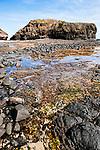 Image Ref: CA972<br /> Location: Bushrangers Bay Track<br /> Date of Shot: 28.09.19