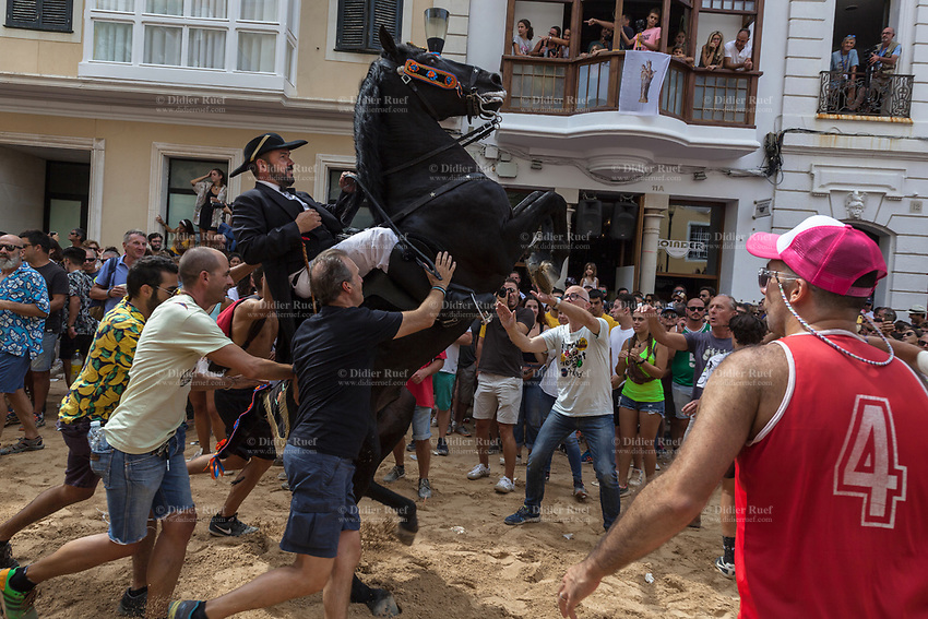 """Spain. Balearic Islands. Minorca (Menorca). Mahon. Rising horse at  """"Festes de la Mare de Déu de Gràcia"""" during the traditional summer festival. The Menorquín is a breed of horse indigenous to the island and is closely associated with the doma menorquina style of riding. The riders wear black and white and most of their horses (adorned with ribbons and multi-coloured rosettes) are of the highly-considered Menorcan breed. The riders and their horses parade through the streets, and these magnificent and remarkably calm horses rear up on their hind-legs to the delight of the crowd. The most valued quality of Menorquín horse is its suitability for the traditional festivals of Menorca. Horses and riders are at the centre of local fiesta celebrations, in a tradition that may go back to the 14th century and incorporate elements of Christian, pagan and Moorish ritual. Some 150 riders participate in the festival in Mahón. Riders pass through the crowds, executing caracoles and repeatedly performing the bot. The aim of the 'bot' is for the horse to stand on its hind legs while keeping its head and shoulders relaxed and without tension; the more often it is performed and the greater the distance travelled, the greater the applause of the crowd. The elevade, in which the horse beats the air with the front hooves, is also a part of the ritual of the fiesta. Touching the horses is believed to bring good luck. Maó, written in English as Mahon, is a municipality, the capital city of the island of Menorca, and seat of the Island Council of Menorca. The city is located on the eastern coast of the island, which is part of the autonomous community of the Balearic. In Spain, an autonomous community is a first-level political and administrative division, created in accordance with the Spanish constitution of 1978, with the aim of guaranteeing limited autonomy of the nationalities and regions that make up Spain. 8.09.2019 © 2019 Didier Ruef"""