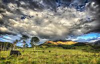 Happy Cows - Colorado - San Juan Mountains - Telluride