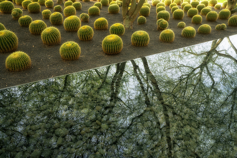 Barrel cactus and reflecting pool. Sunnylands gardens. Palm Springs, California