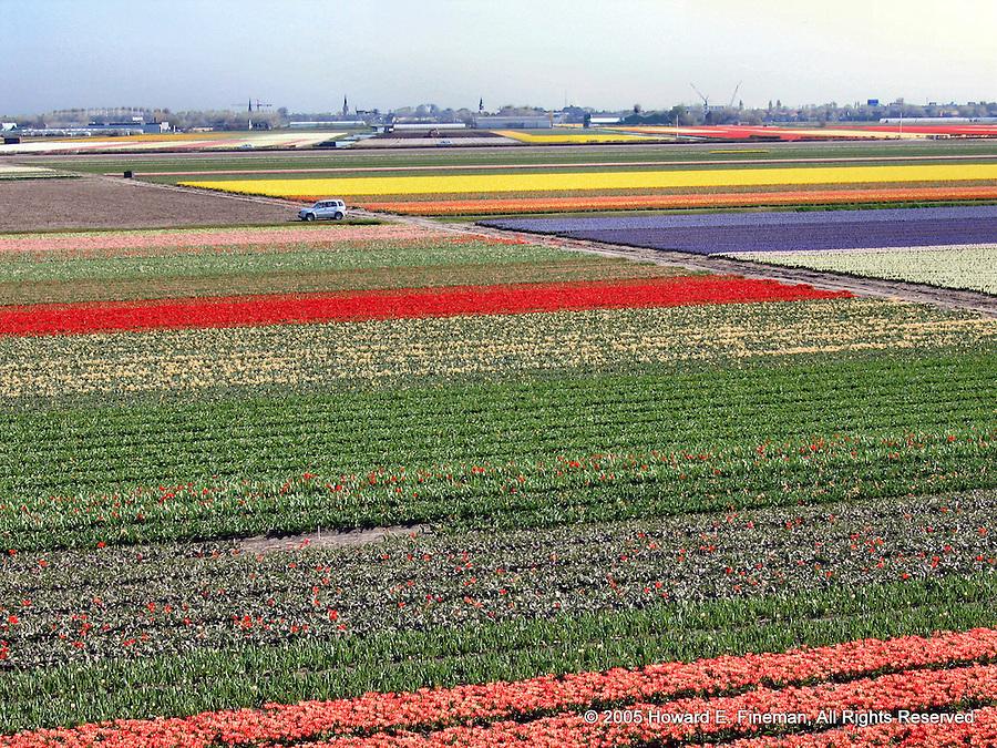 Tulip Field, Kuekenhof
