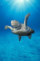 Kemp's ridley sea turtle, Lepidochelys kempii, Gulf of Mexico, Caribbean Sea, Atlantic Ocean (c) (digital composite)