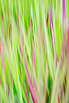 Colorful pink and green vertical abstract of grass