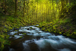 The cascading waters of Gorton Creek flow gently around this curve while the late afternoon light glows in the distance.<br /> <br /> ARTIST CHOICE: 20x30 Lumachrome/Acylic