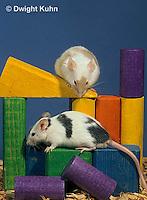 MU60-025z  Pet mouse - exploring
