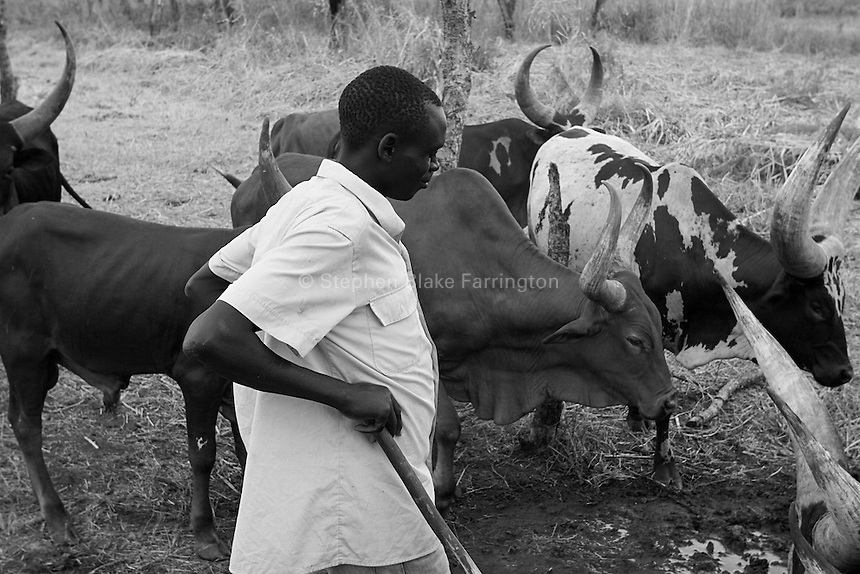 Empowering Victims of War- Watching over the farmÕs cattle. Canaan Family Farm lends land to displaced people from the Northern conflict to have them learn the benefits of work and empowerment. Rwakayata, Masindi, Uganda, Africa. December 2005 © Stephen Blake Farrington