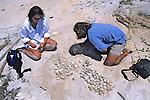 Erin & James Removing Turtle Eggs