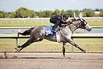 #39.Fasig-Tipton Florida Sale,Under Tack Show. Palm Meadows Florida 03-23-2012 Arron Haggart/Eclipse Sportswire.